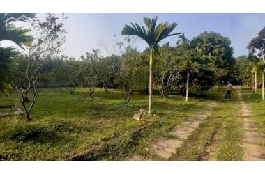 Bán gấp 3600m2 400m2 thổ khuân viên nhà vườn hoàn thiện rẻ nhất Thị Xã Lương Sơn lh : 0987757698