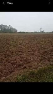 Thiếu người làm cần cho thuê lại 2,5 ha đất bãi sông Hồng- Đan Phượng- Hà Nội. 0914710258